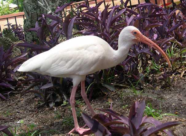 common walt disney world wild birds